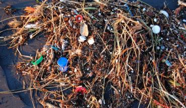 Plastic pollution damages bacteria that produce oxygen