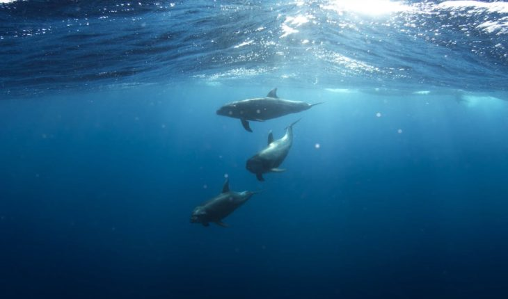 The problem of the impact of underwater noise on marine fauna