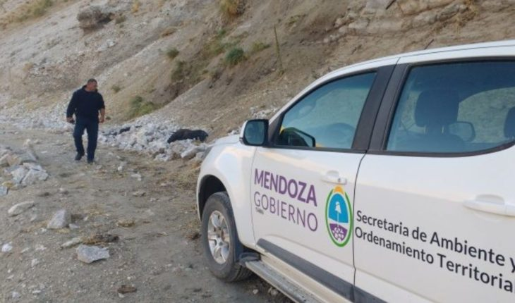 They found 3 condors killed in Malargüe and activated the emergency protocol.
