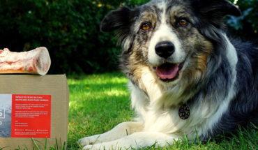 Alimentación cruda para perros: ¿es recomendable?