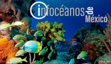 Infocéanos de México, la primera plataforma digital que reúne información sobre datos de investigación marina del país