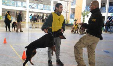 """PDI lanza ciclos de adiestramiento para perros """"potencialmente peligrosos"""""""
