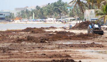 """Sargazo en Quintana Roo es """"asunto menor"""" dice AMLO"""