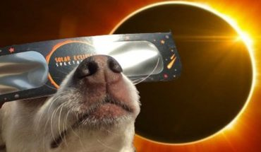 How are animals going to react to the total eclipse of the sun?