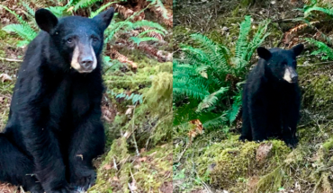 In The United States, they kill a bear for being too human-friendly
