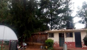 Caída de árboles moviliza cuerpos de auxilio en Zitácuaro, Michoacán