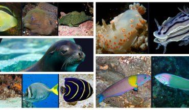 Estas especies habitan en el Mar de Cortés, donde se derramó acido sulfúrico