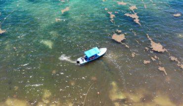 """Hallan el """"cinturón de sargazo"""" más grande del mundo flotando en Golfo de México"""