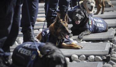 Policía Federal dará en adopción a 28 perros