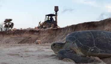 Semarnat aprobó proyecto hotelero que afecta a tortugas