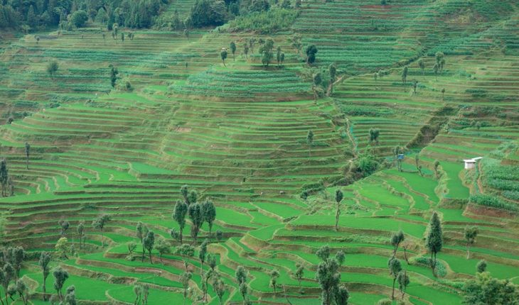 Valores asiáticos. Sistema de arrozales en terrazas de los hani en la prefectura de Honghe, condado de Yuanyang (República Popular China). Foto: ©FAO/Sara Manuelli (CC BY-NC 2.0)