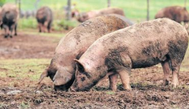 Alert for detection of trichinosis in The Borbollón