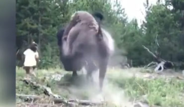 Bison attacks and throws a girl into the air in Yellowstone Park (Video)