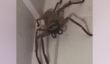 Woman find a huge spider on the roof of her house