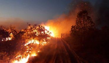 """Amazonía: la """"Tragedia de los Comunes"""""""