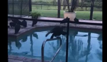Buitres vomitando afuera de su habitación arruinan sus vacaciones en Florida