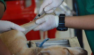 Transfusiones de sangre entre animales: el método poco conocido que podría salvar a tu mascota
