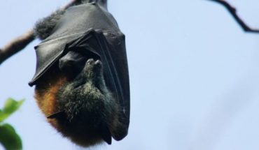 Bats and 4 lessons on survival we can learn from these animals