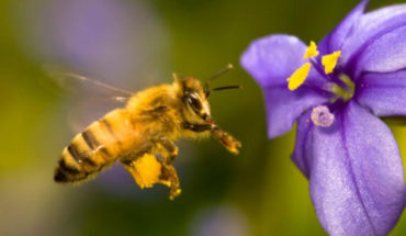 Bee colony kills queen who copulates with two males