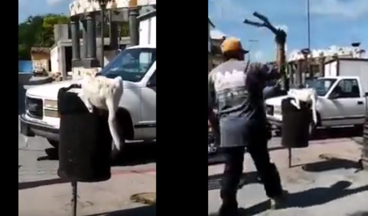 Man cuts a dog's tail when he was looking for some food in Puebla (Video)
