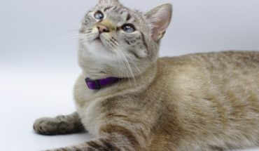 Specialist recommends sterilizing cats before puberty