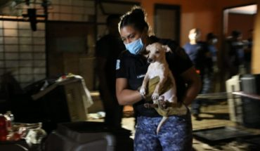They rescue 55 battered dogs in a house in Lindavista
