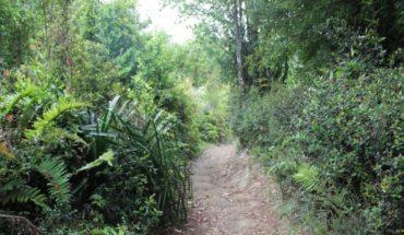 El triple problema socio-ambiental de Chiloé: ¿dónde está el Estado?