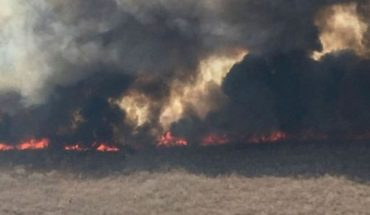 Amazon fires: what happened to the flames sweeping the jungles in Brazil, Bolivia and Paraguay?