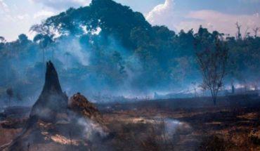 Amazon fires: who benefits from the economic exploitation of the Brazilian Amazon