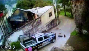Cops run over and kill a puppy in Ecatzingo, Edomex (Video)