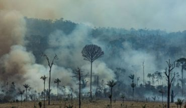 """Greenpeace warns of Amazon fire: """"It's like 11 Torres del Paine National Parks have burned down"""""""