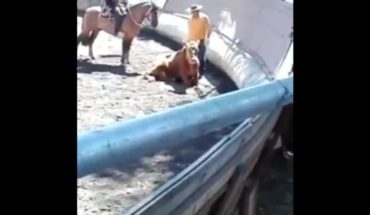 Historic: First mistreatment of animal abuse in a rodeo is declared admissible