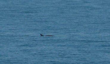 The sea vaquita lives! Photograph six copies