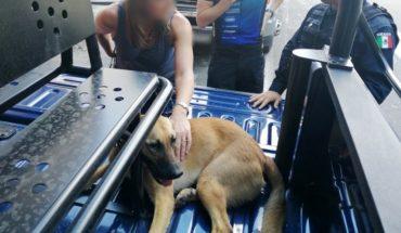 Uk Ambassador's Dog Rescue