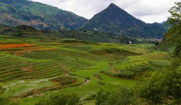 Presencia global de Asia y Pacífico: el continente emergido. Sistema de arrozales en Sapa (Vietnam). Foto: Brian Jeffery Beggerly (CC BY 2.0). Blog Elcano