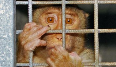 Animal experiments: hypocritical outrage?