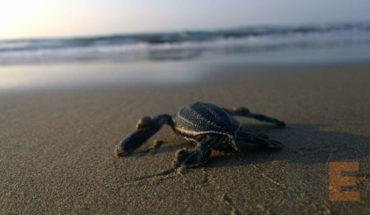 Lazaro Cardenas ready to make turtle releases
