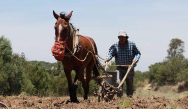 Los 5 programas de Agricultura con más presuntos desvíos en 2018