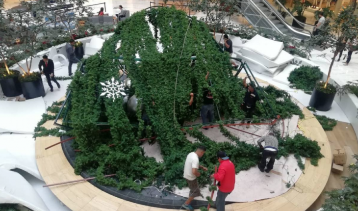 15-metre tree collapses and injures a worker in Plaza Manacar