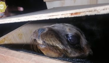 2 are stopped for transporting sea lions without permission in CDMX