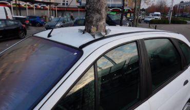 Tree that goes through a car, the truth, the false, the good and the bad (Video)