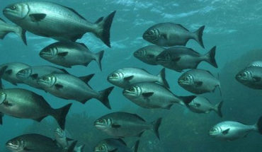 Marine species, increasingly threatened by lack of oxygen