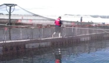 Salmon guild suspended participation of companies accused of collusion by the National Economic Prosecutor's Office