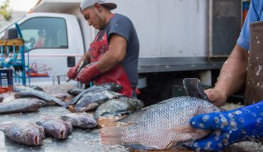 These fish contain high levels of mercury and damage your health