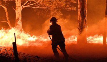 Las especies que pueden desaparecer por los incendios