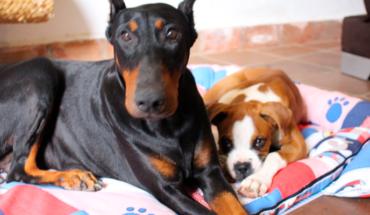 Morelia City Council prepares animal adoption fair