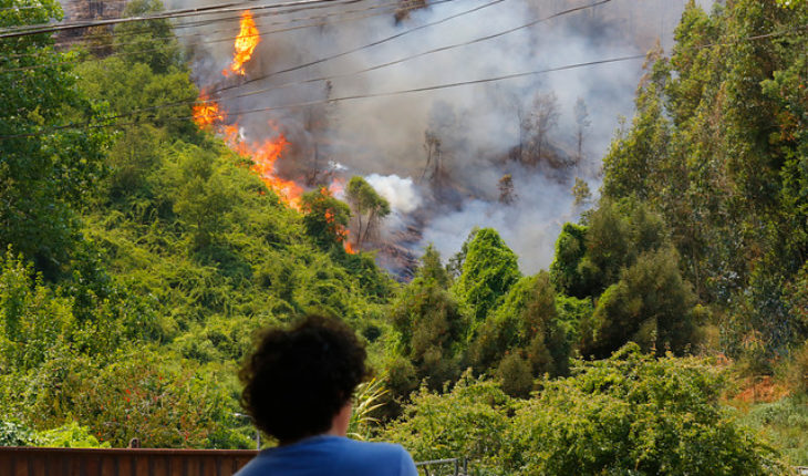Wildfires: Onemi keeps red alert in Chiguayante and extends it to Hualqui, Santa Juana and Curanilahue