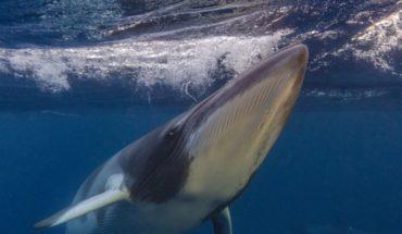 ¿Qué pasa con las ballenas del océano que no están pudiendo comunicarse?