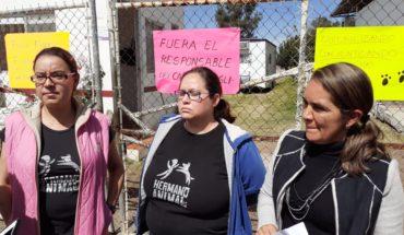 Animalistas denuncian presunto maltrato en Centro de Atención Animal de Morelia