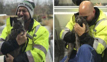 Camionero llorar reunirse con su gato que estaba perdido